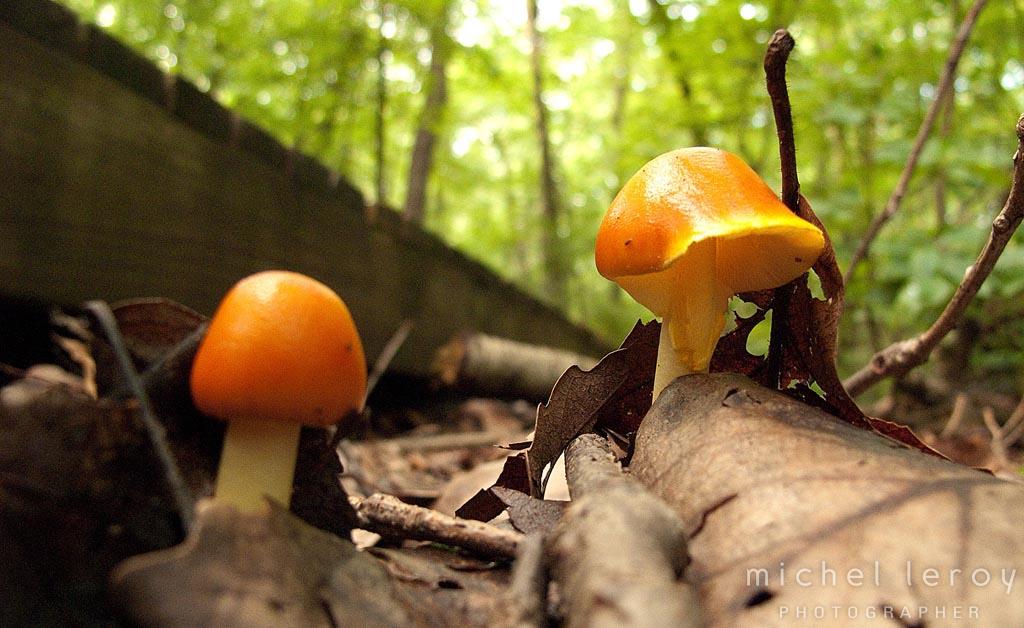 Mushroom Hunting Adventure by Michel Leroy