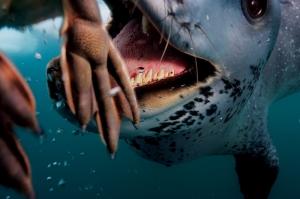 Paul Nicklen's 'Polar Obsession'